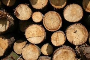 schlagzeug kaufen Holz